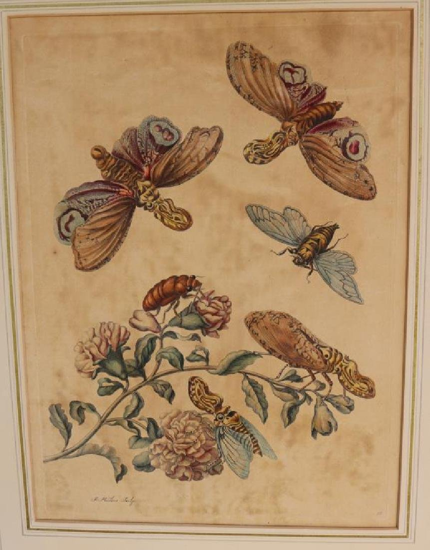 2 MATTED HAND COLORED ENGRAVINGS ATTRIBUTED TO - 2