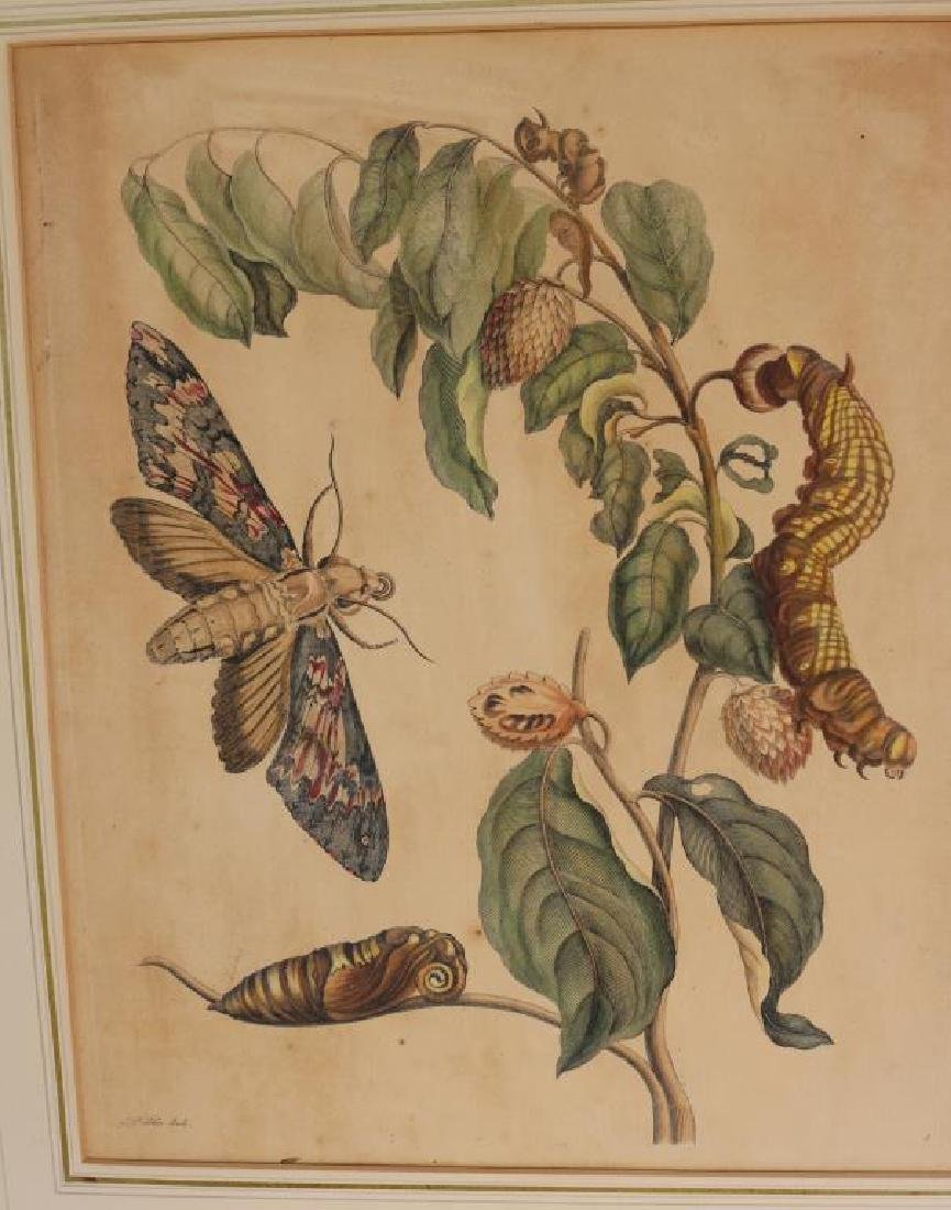 2 MATTED HAND COLORED ENGRAVINGS ATTRIBUTED TO - 3