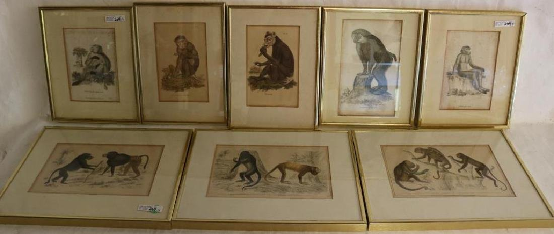 COLLECTION OF 8 FRAMED & GLAZED MONKEY PRINTS,