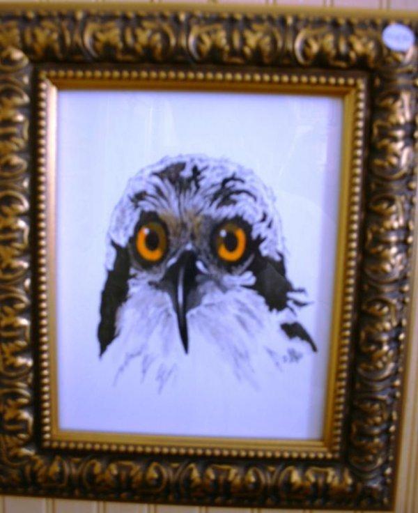 8: FRAMED & GLAZED BIRD PRINT OWL, SIGNED D. AYRE, 9 1/