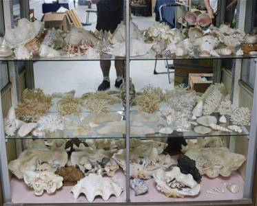 LARGE COLLECTION OF SEA SHELLS, CORAL, ETC. 10