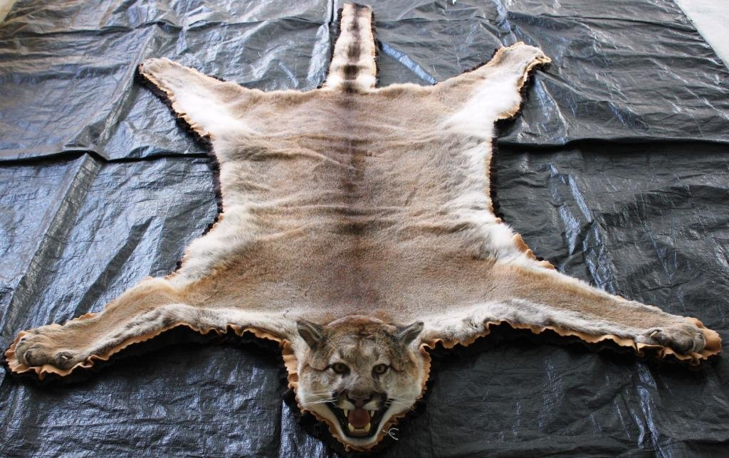 MOUNTAIN LION SKIN RUG,