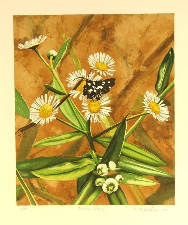 1230: Mary Booth Owen Daisy Pencil Signed & Numbered