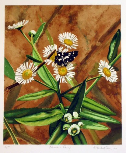 2007: Butterfly on Daisy by Mary Booth Owens