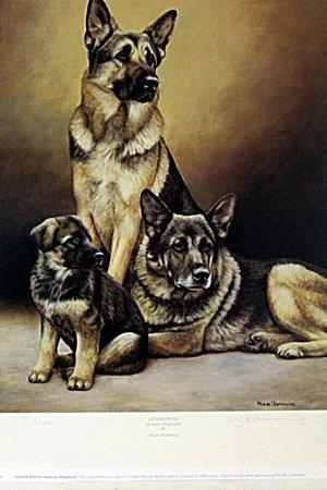 """"""" GENERATIONS GERMAN SHEPHERDS"""" BY NIGEL HEMMING"""