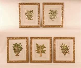Antique Lithograph's of Leafy Plants