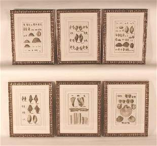 Antique Copper Engravings of Shells