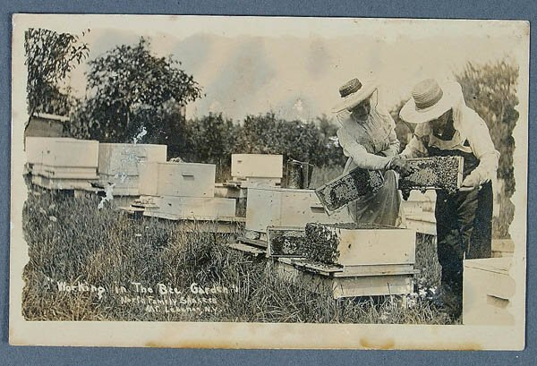 """606: A REAL PHOTO SHAKER POSTCARD of """"Shakers working"""