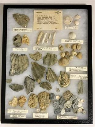 Authentic 15 Million Year Old Fossil Collection