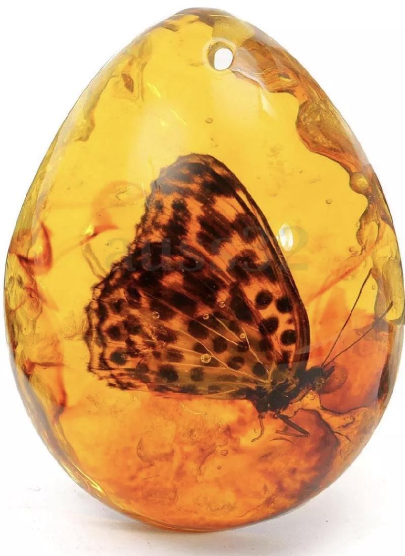 Amber Encased Amazon Butterfly Teardrop Amulet