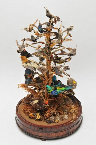 A Victorian taxidermy case of species of birds perched