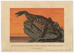 IGUANADON Dinosaur Natural history 1900