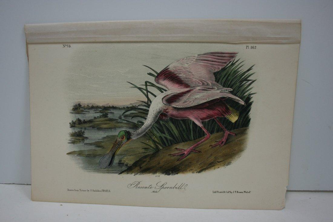 Original Audubon lithograph, 1856