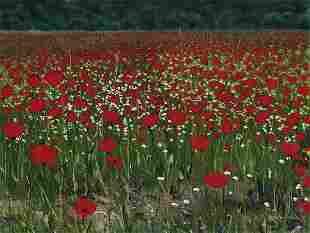 Poppies Povence, By Laurie Chase