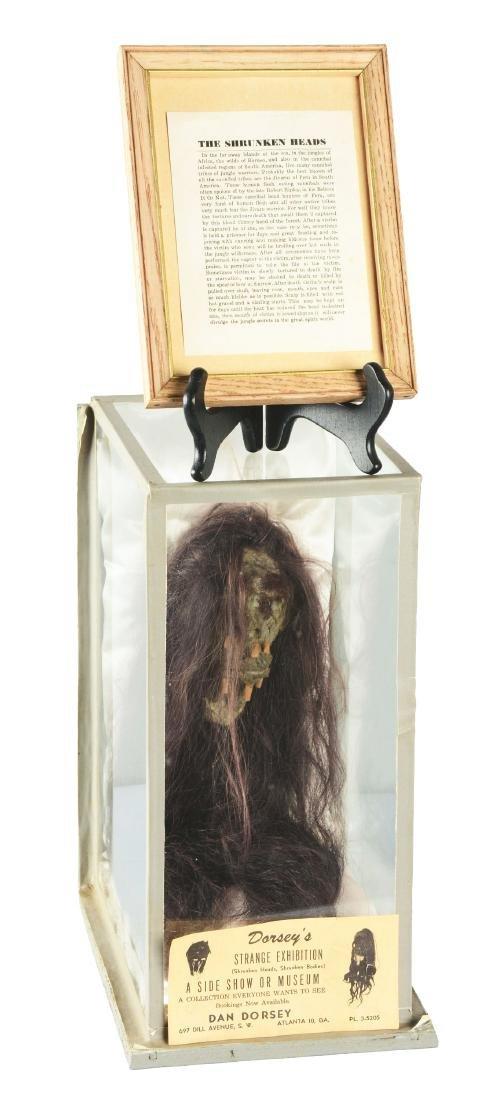 Dan Dorsey Shrunken Head In Display Case.