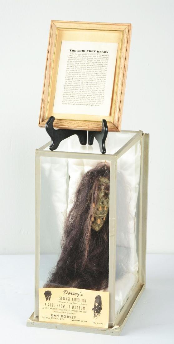 Dan Dorsey Shrunken Head In Display Case. - 2