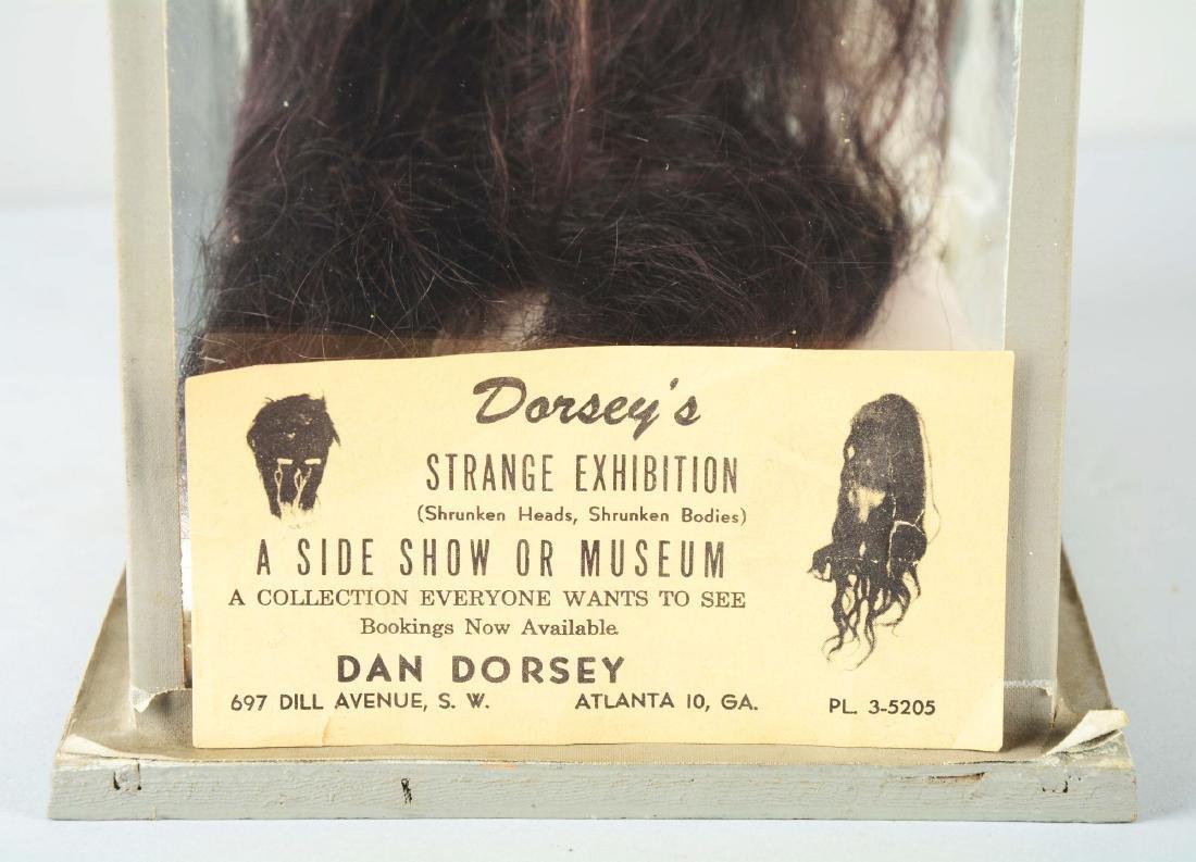 Dan Dorsey Shrunken Head In Display Case. - 3