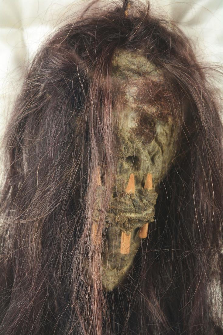 Dan Dorsey Shrunken Head In Display Case. - 5