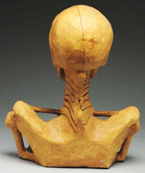 697: Odd Fellows Paper Mache Skeleton Bust. - 2