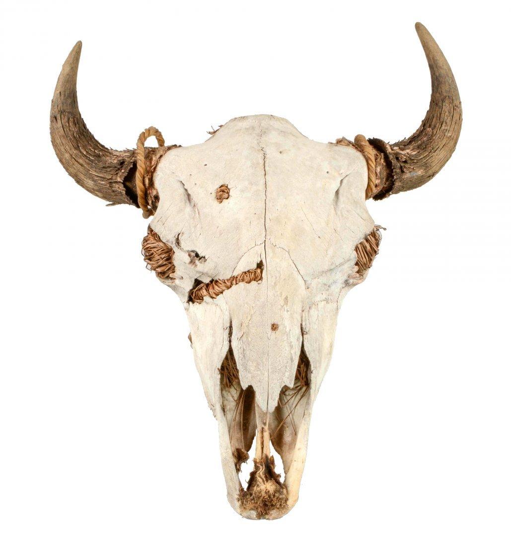 Large Authentic Buffalo Skull.