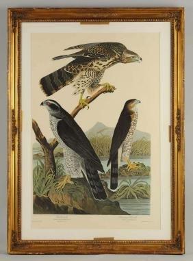 After John James Audobon Yellow Crowned Heron &