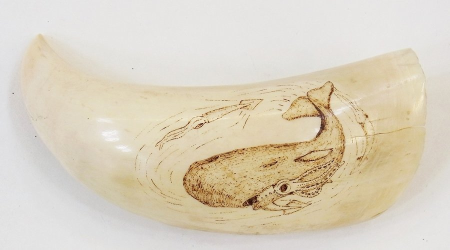 Scrimshaw decorated with whale and giant squid