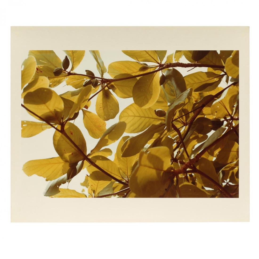 William Eggleston (American, b. 1939), Untitled from