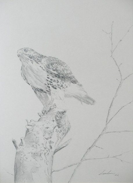 3: Artist Signed Pencil Drawing of a Hawk,