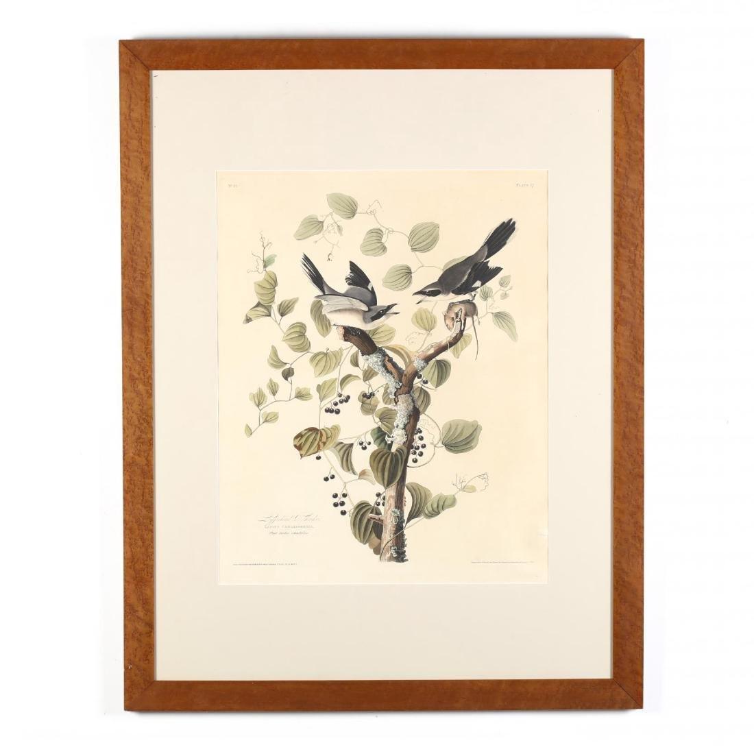 after John James Audubon (American, 1785-1851),