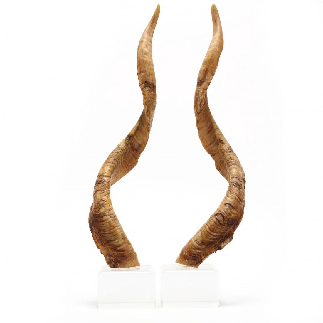 Pair of Kudo Horns on Lucite Bases