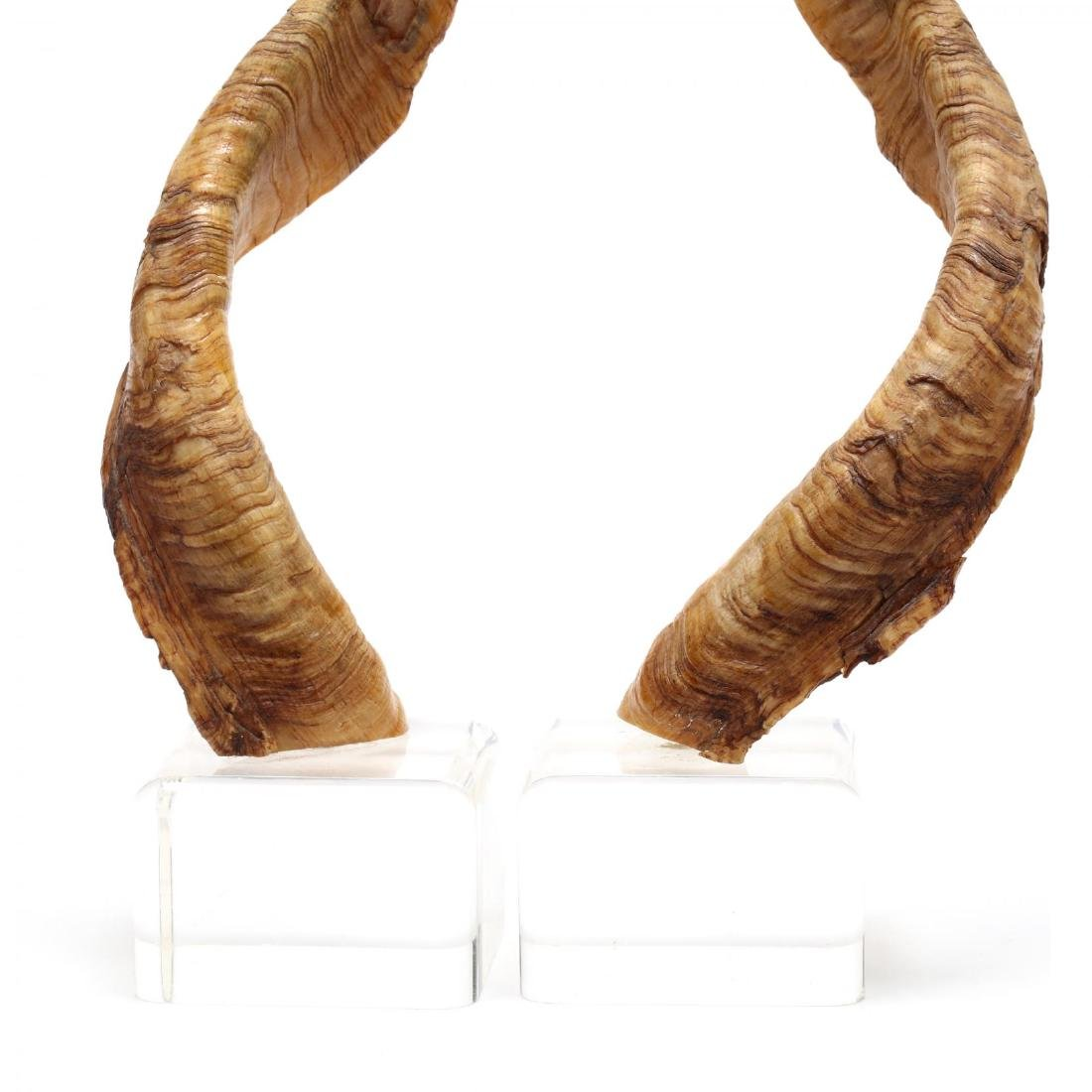 Pair of Kudo Horns on Lucite Bases - 2