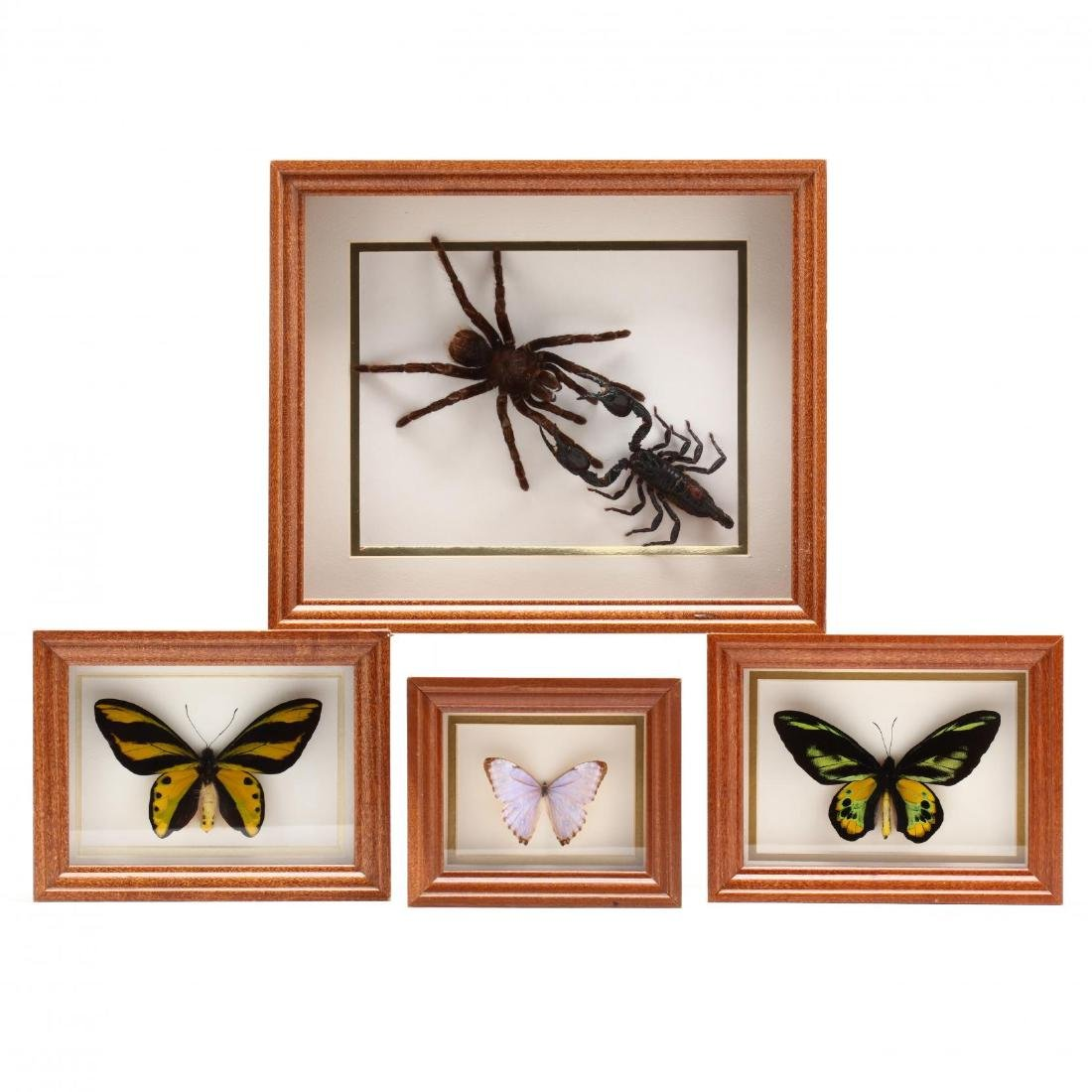 Four Insect Shadow Box Displays