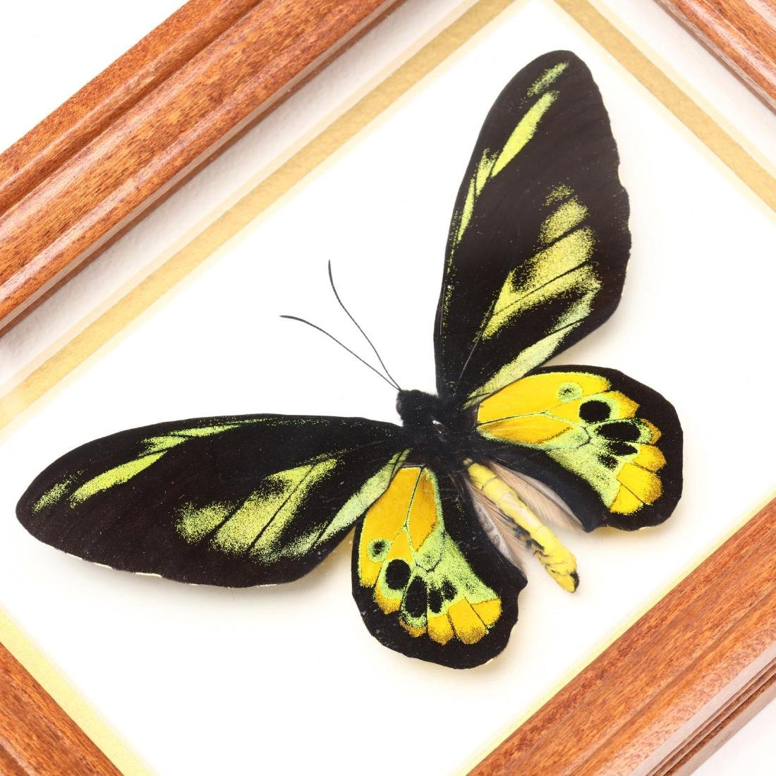 Four Insect Shadow Box Displays - 4