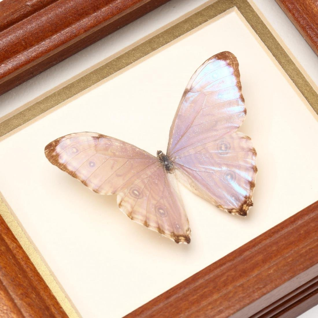 Four Insect Shadow Box Displays - 6