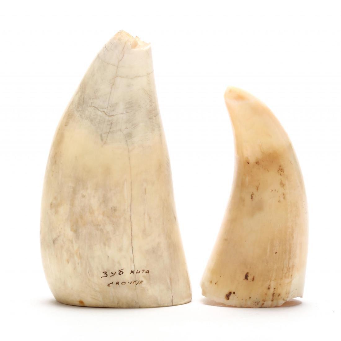 Two Vintage Scrimshaw Teeth - 2