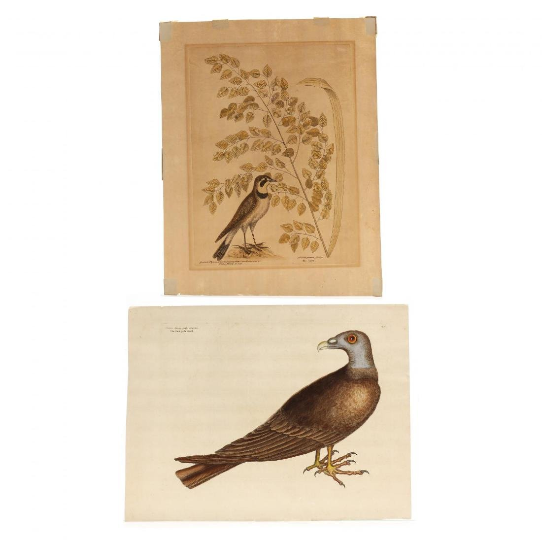 Mark Catesby (British, 1679-1749), Two Engravings from