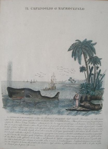 5: Hand Colored Whaling Lithograph, Italian,