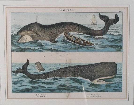 15: Colored Engraving & Aquatint, Whaling, German, c. 1