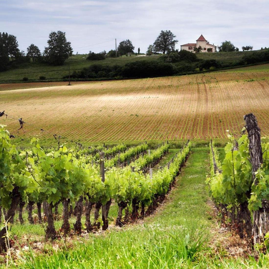 Chateau Rieussec - Vintage 2009