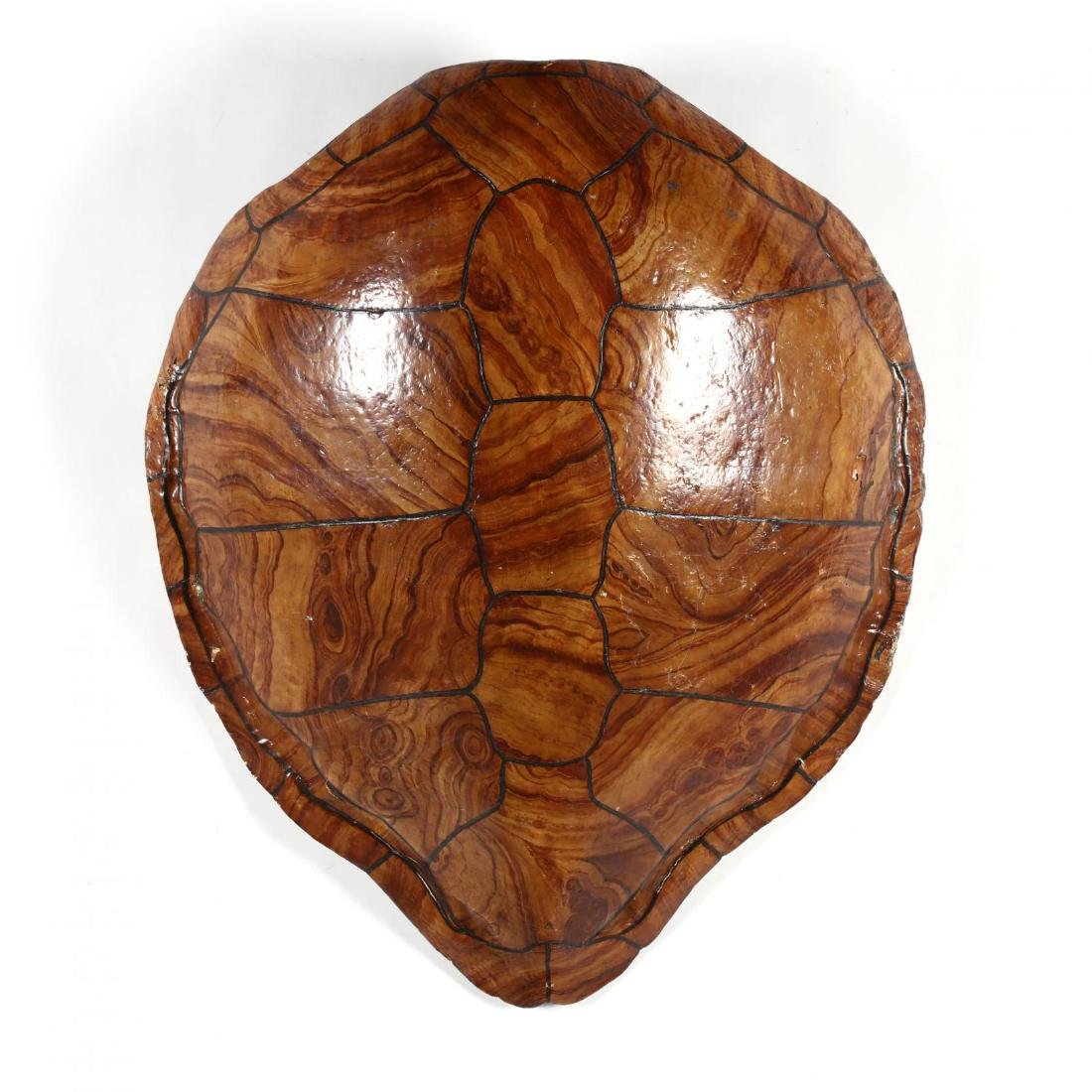 Painted Wall Mount Faux Sea Turtle Shell