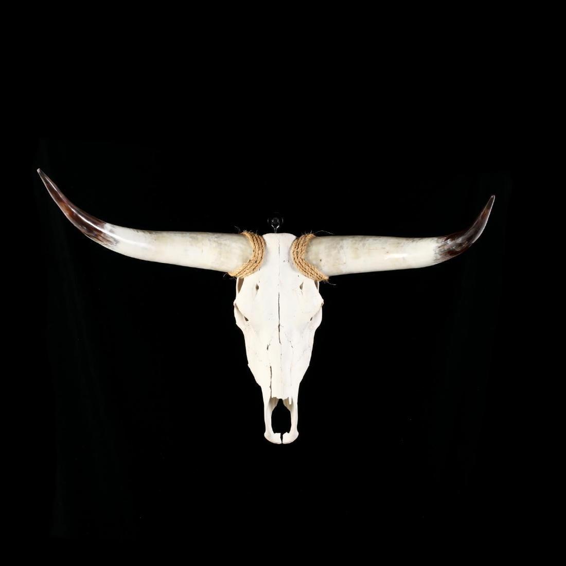 Wall Mount Longhorn Steer Skull and Horns