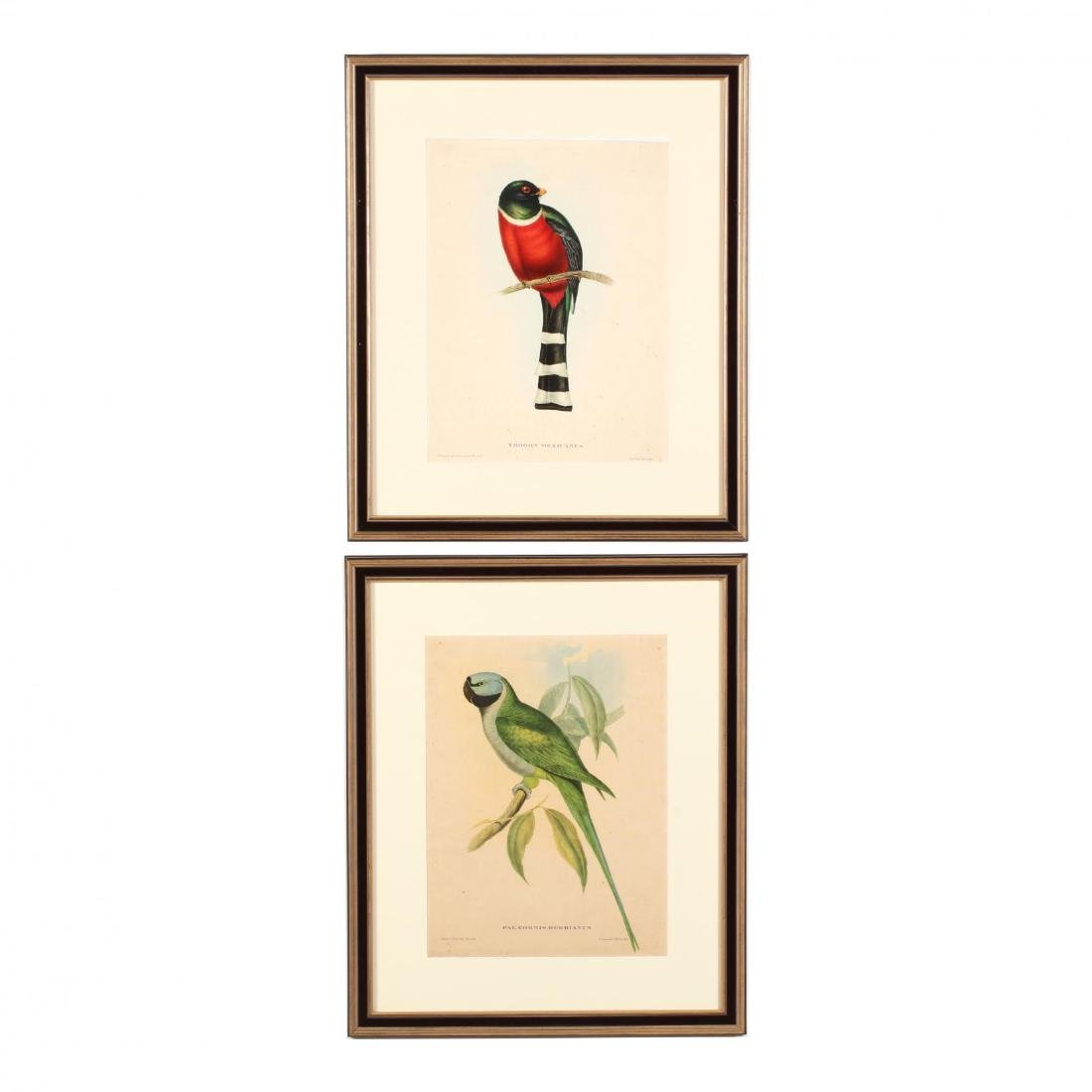Two Framed Contemporary Prints after John Gould's