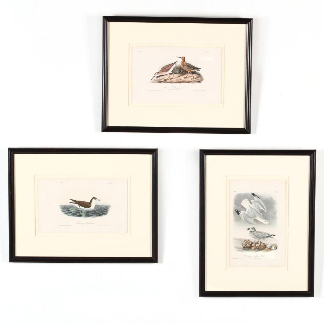 after John James Audubon (American, 1785-1851), Three
