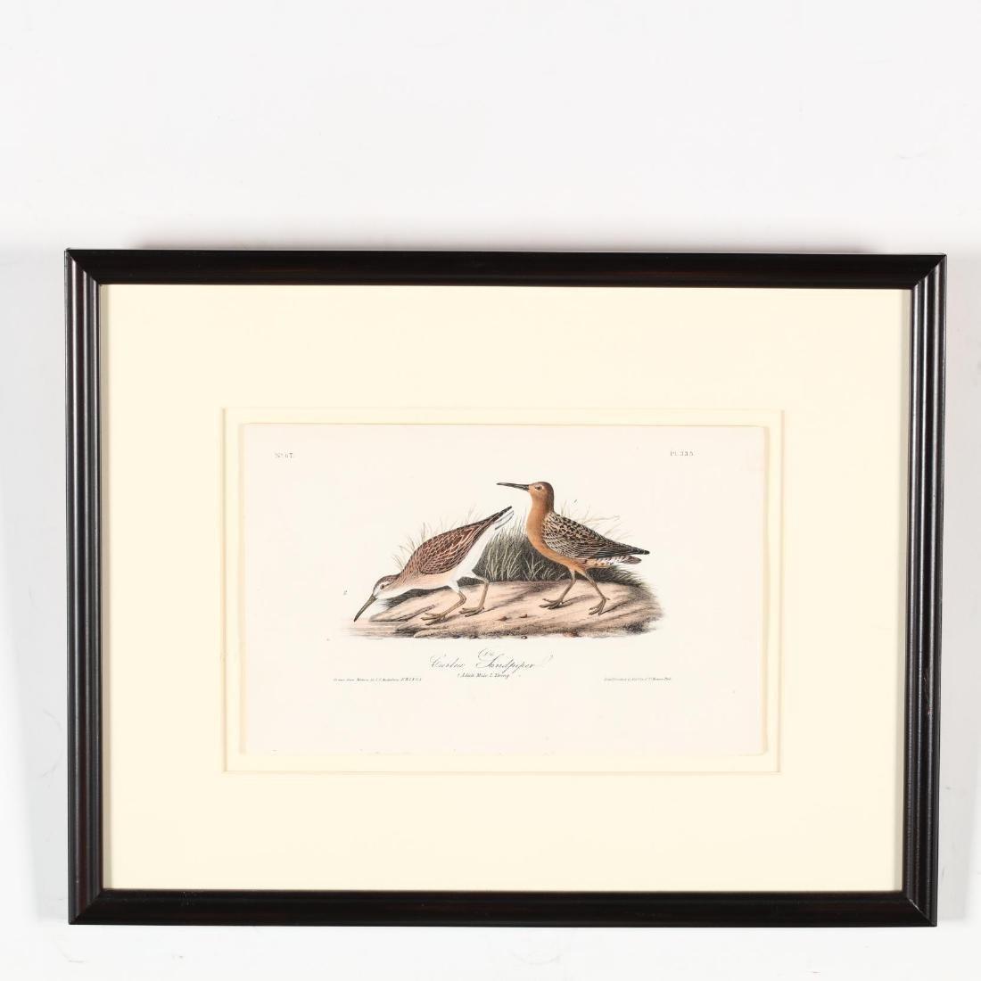 after John James Audubon (American, 1785-1851), Three - 2