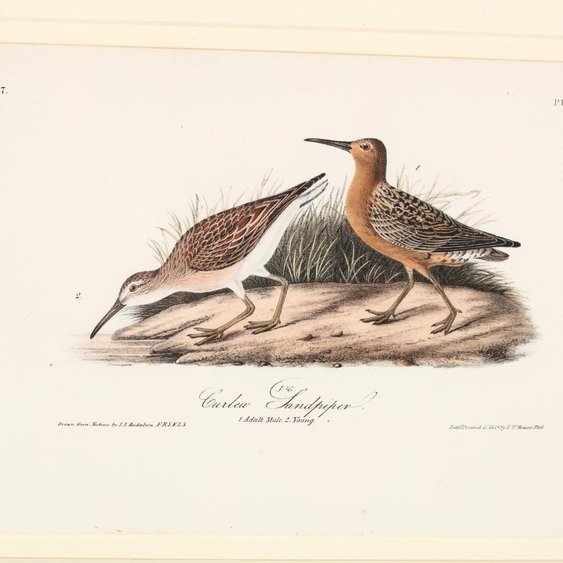 after John James Audubon (American, 1785-1851), Three - 3