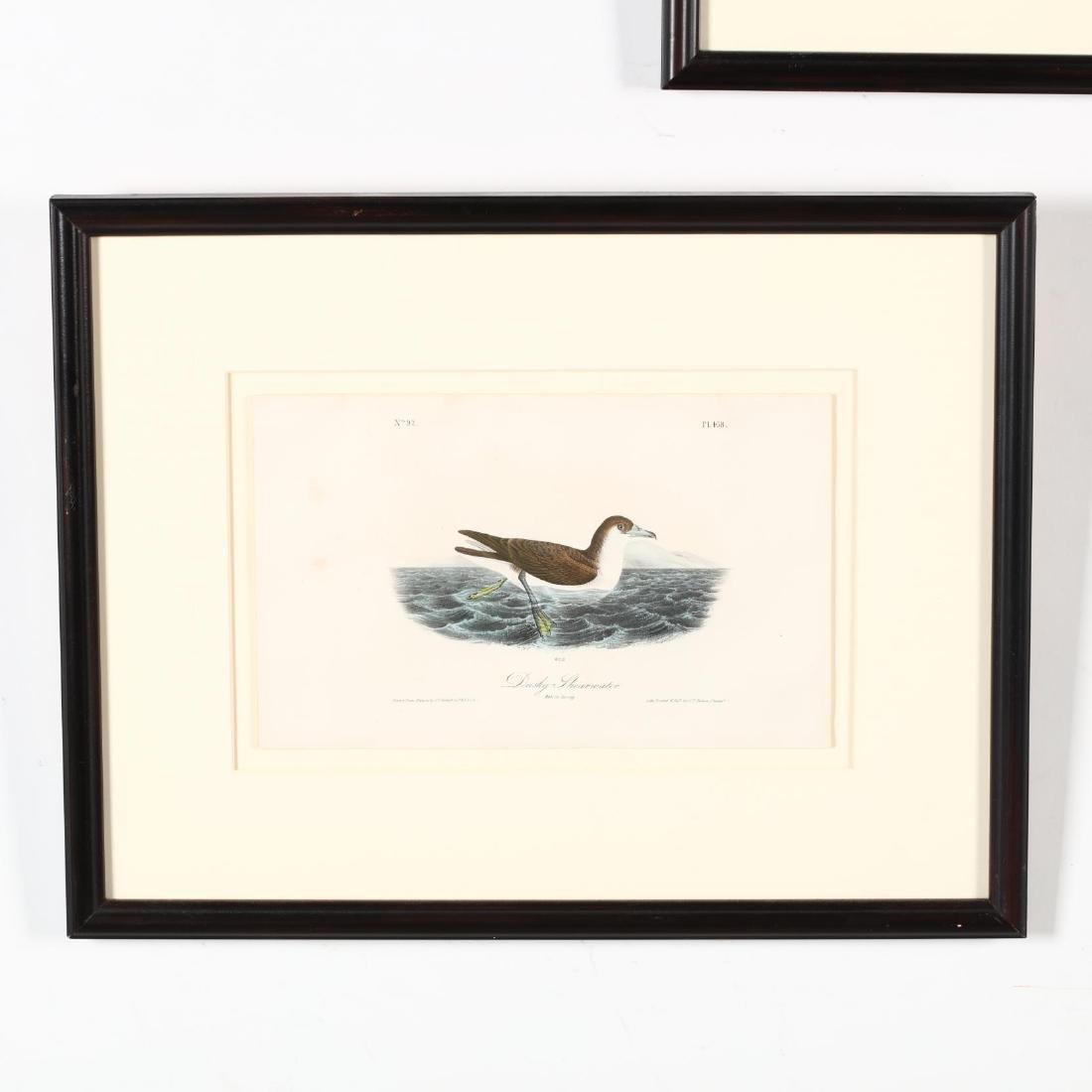 after John James Audubon (American, 1785-1851), Three - 4