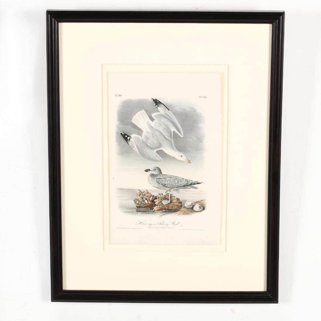 after John James Audubon (American, 1785-1851), Three - 5