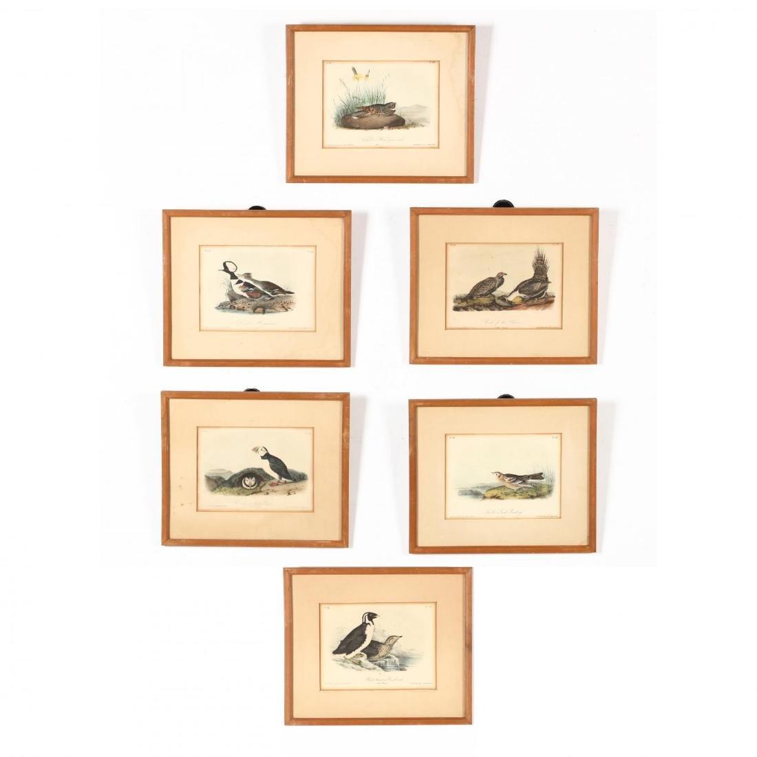 after John James Audubon (Am., 1785-1851), Six Prints