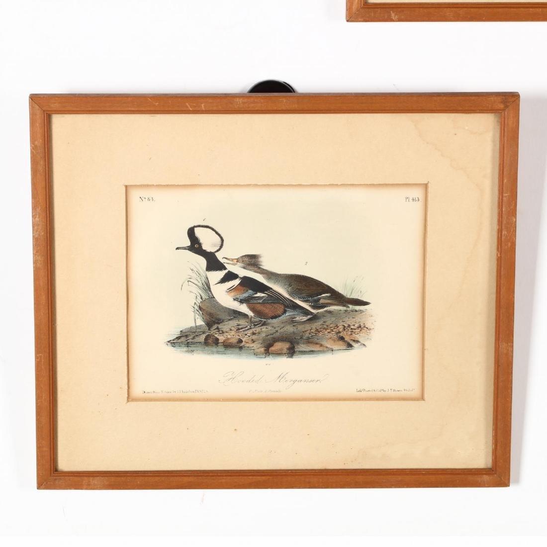 after John James Audubon (Am., 1785-1851), Six Prints - 3