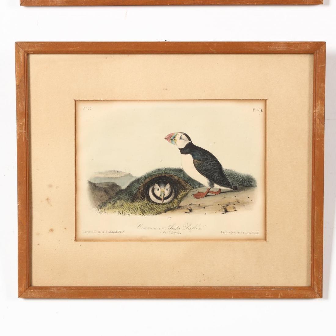 after John James Audubon (Am., 1785-1851), Six Prints - 4